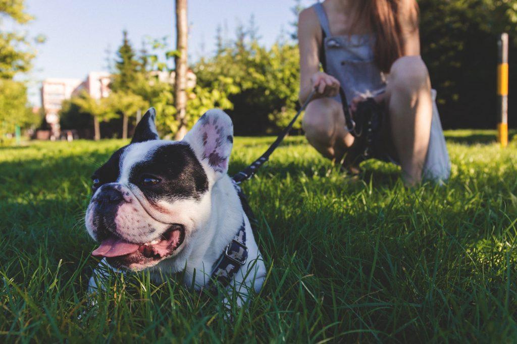 PodiumIO Pet Sitting business